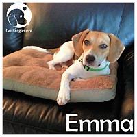 Adopt A Pet :: Emma - Chicago, IL
