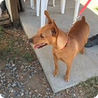 Adopt A Pet :: DUNCAN - Elk Grove, CA