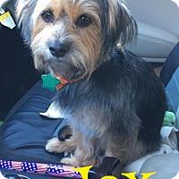 Adopt A Pet :: Jax - Cantonment, FL
