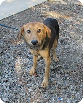 Hound (Unknown Type) Mix Dog for adoption in Warrenton, North Carolina - Myra