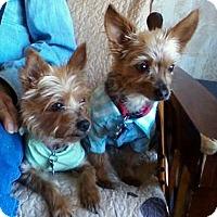Adopt A Pet :: Ellie & Oliver - Jacksonville, FL
