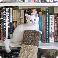 Adopt A Pet :: Ziggy Stardust - Covington, KY