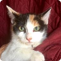Adopt A Pet :: JILL - pasadena, CA
