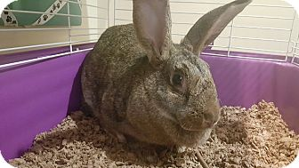 American Mix for adoption in Scituate, Massachusetts - Cherokee