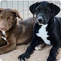 Adopt A Pet :: Derby - Apache Junction, AZ