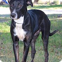 Adopt A Pet :: MULLIGAN - Jacksonville, FL