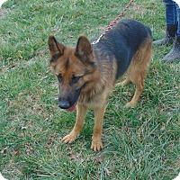 Adopt A Pet :: Cameron - Nashua, NH