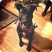 Adopt A Pet :: Jax - Wilmette, IL