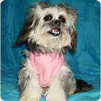 Adopt A Pet :: Sylvia - Mooy, AL