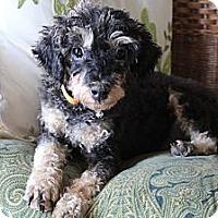 Adopt A Pet :: Walter - Wytheville, VA