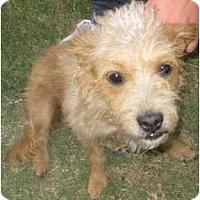 Adopt A Pet :: Molly - Los Alamitos, CA