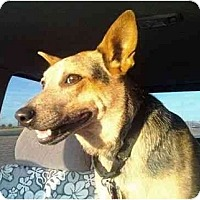Adopt A Pet :: Kora - ADOPTION PENDING - Phoenix, AZ
