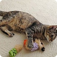 Adopt A Pet :: Paula - Reston, VA