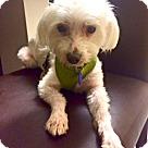 Adopt A Pet :: Toby