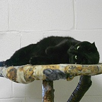 Adopt A Pet :: Jack Sparrow - Huntsville, AL