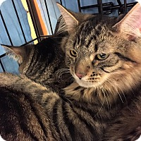 Adopt A Pet :: Gulliver - Frederick, MD