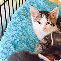 Adopt A Pet :: Reese - Island Park, NY