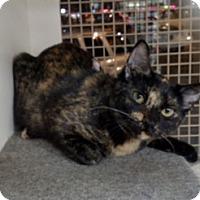 Adopt A Pet :: River - San Ramon, CA