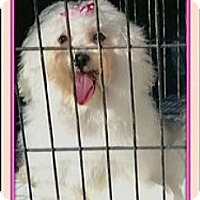 Adopt A Pet :: Kayla - Rancho Cucamonga, CA
