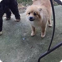 Adopt A Pet :: Patterson - Alpharetta, GA