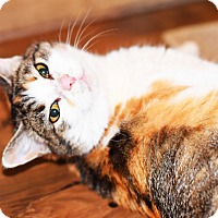 Adopt A Pet :: Princess - Xenia, OH