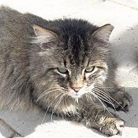 Adopt A Pet :: Abel - Arlington/Ft Worth, TX