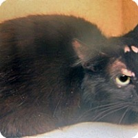 Adopt A Pet :: 297199 - Wildomar, CA