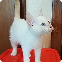 Adopt A Pet :: Scully - Trenton, NJ