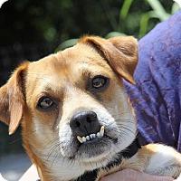 Adopt A Pet :: Owen - Hillsboro, IL