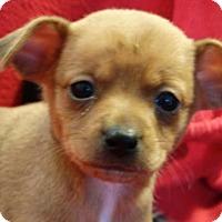Adopt A Pet :: Rosebud - Vacaville, CA