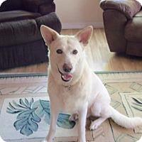 Adopt A Pet :: Wesley (FL) - Hooksett, NH