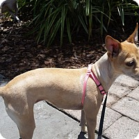Adopt A Pet :: Rosie - S. Pasedena, FL