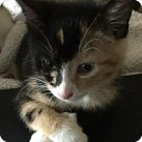 Adopt A Pet :: Leela - McHenry, IL