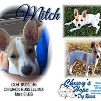 Adopt A Pet :: Mitch - Boyd, TX