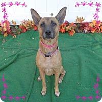 Adopt A Pet :: MONTIEN - Marietta, GA
