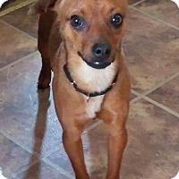 Adopt A Pet :: Barney - Tonawanda, NY