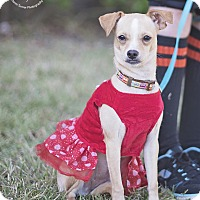 Adopt A Pet :: ButterCup - Kingwood, TX
