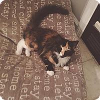 Adopt A Pet :: Tink - Winchester, KY
