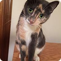 Adopt A Pet :: Reba - Melbourne, FL