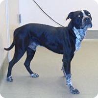 Adopt A Pet :: Martin - Wildomar, CA