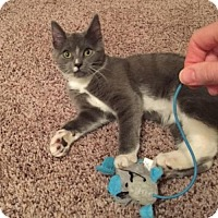 Adopt A Pet :: Piper - Redding, CA