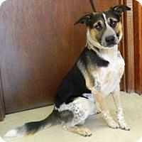 Adopt A Pet :: Sparky - Columbus, NE