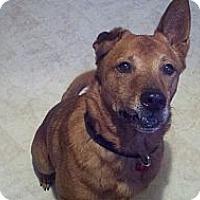 Adopt A Pet :: Capt. Jack - Clermont, FL