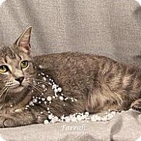 Adopt A Pet :: Farrah - Kerrville, TX