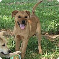 Adopt A Pet :: Mulan - Hagerstown, MD