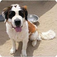 Adopt A Pet :: Coco - Sparks, NV
