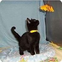 Adopt A Pet :: Wrangler - McDonough, GA