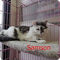 Adopt A Pet :: Samson - Chilhowie, VA