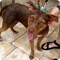 Adopt A Pet :: Kiah - Miami, FL