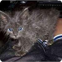 Adopt A Pet :: Oscar - Davis, CA